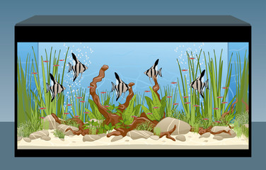 Home aquarium with fish and plants