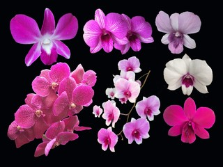 Closeup set of collection orchids flowers isolated on black background.