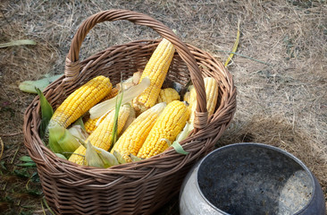 Corn in a basket for sale at the fair.