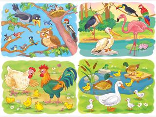 Set of different birds. Four pictures. Illustration for children