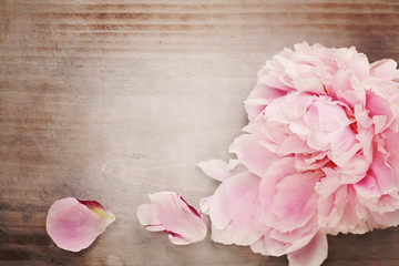 Beautiful Pink Peony Flower on Vintage Wooden Background