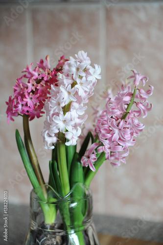 Tender pink flowers of hyacinth bulbs in a glass jar nice pink tender pink flowers of hyacinth bulbs in a glass jar nice pink background spring mightylinksfo