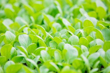Agriculture. Growing plants of seedlings