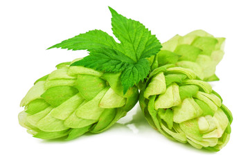 lush and green hop