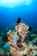 Colorful coral pinnacle