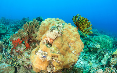 Colorful Crinoids and hard coral on a tropical reef