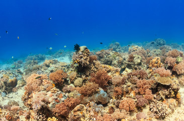 Tropical fish around a colorful, healthy coral reef