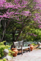 Spring background. Landscape with pink blooming tree and wooden garden bench, a place to rest in the sunshine.