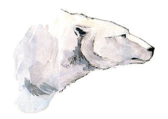Polar bear head side view watercolor illustration isolated on white background.