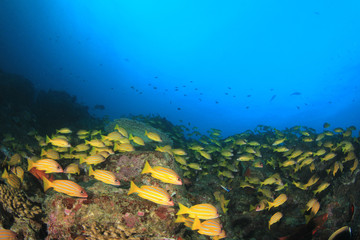 Fish school in ocean