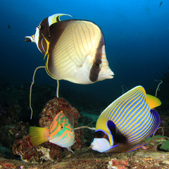 Tropical fish coral reef in ocean