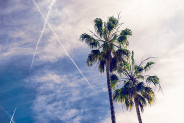 palms at sunny day at blue sky with clouds background