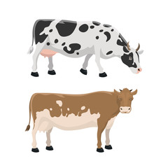 Bull and cow farm animal vector illustration.