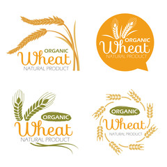 Yellow paddy Wheat rice organic grain products and healthy food banner sign vector set design
