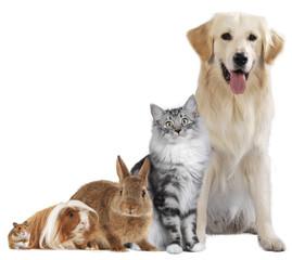 Haustiergruppe mit Hund, Katze und Nager freigestellt auf weiß