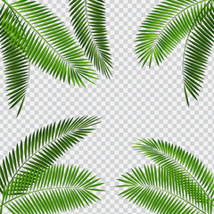 Palm Leaf Vector Illustration on Transparent Background