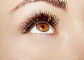 Brown Eye Makeup. Beautiful Eyes Make up detail, perfect beauty eyebrows