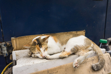 Wild cats with beautiful colour combination white and brown sleeps in side of the road photo taken in Depok Indonesia