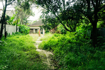 A little pathway in the middle of grass yard direct to a house building surrounding by big trees photo taken in Depok Indonesia