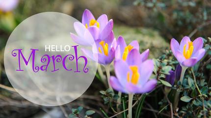 Hello March wallpaper, spring garden background, purple flowers