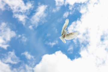 a dove flying in the blue sky