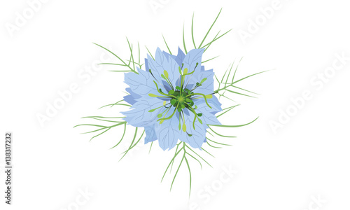 Nigelle de damas stock image and royalty free vector - Nigelle de damas ...