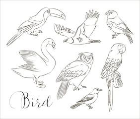 Bird collection set