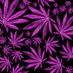 Purple Cannabis leaves on black background