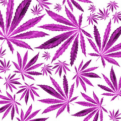 Purple, violet Cannabis leaves on white background