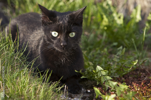 schwarze katze im garten stock photo and royalty free images on pic 138328253. Black Bedroom Furniture Sets. Home Design Ideas
