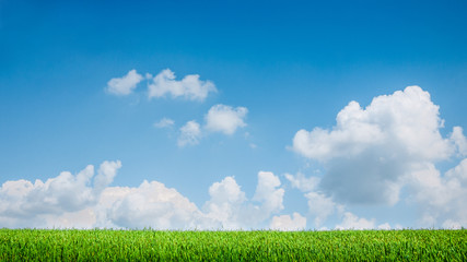 blue sky and summer green field