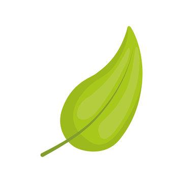 leaf nature ecology icon vector illustration graphic design
