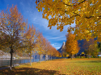 View of a park with a maple alley in autumnal time