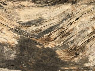 Ground bark old