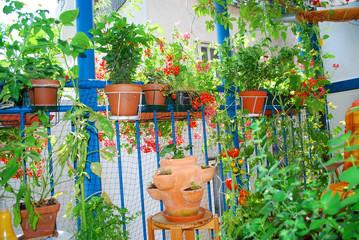 Balkongarten Üppig grünt,blüht und gedeiht es am Balkon.