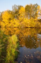 autumn, fall, leaf fall, fall of the leaf