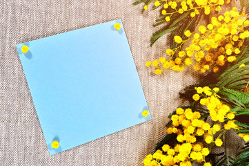 Spring background - blue card with free space for text near the mimosa flowers