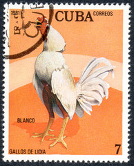 UKRAINE - CIRCA 2017: A stamp printed in Cuba, shows a cock Blanco , the series Fighting cocks, circa 1981