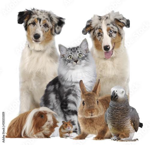 Gemischte Tiergruppe Mit Hundkatzenagervogelkaninchen
