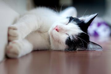 The cat's sleeping on the floor