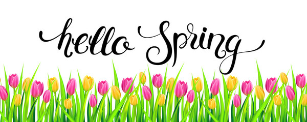 Hello spring banner with handwritten calligraphy lettering and tulips. Vector illustration.