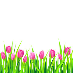 Spring background with pink tulips. Vector illustration.