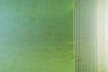 green silk fabric texture, salad coloring