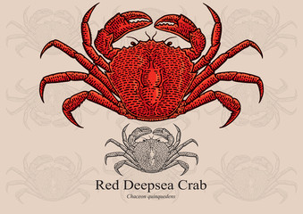 Red Deepsea Crab. Vector illustration for artwork in small sizes. Suitable for graphic and packaging design, educational examples, web, etc.