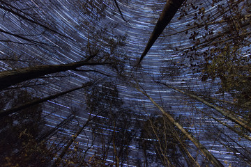 Stars and Trees