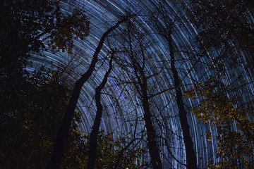 Stars Over Trees