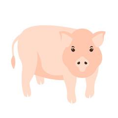 pig vector illustration Flat style