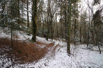 last snow n forest