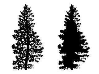 Two silhouettes of pine trees.