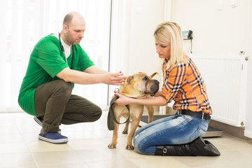 Veterinarian or doctor checking up dog